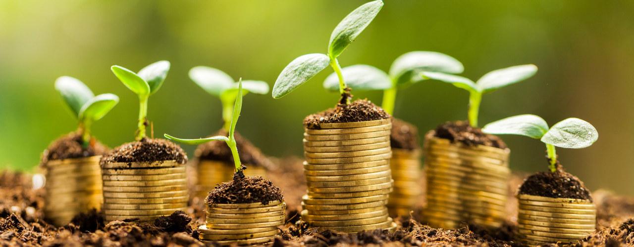 Penger vokser opp av bakken